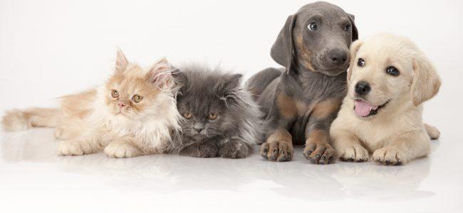 Souscrire une assurance animaux
